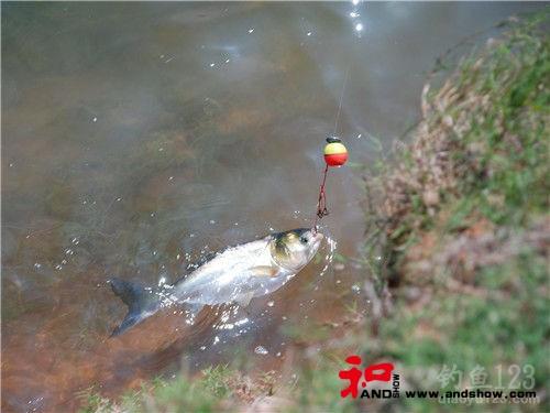 适合水库钓鲢鳙鱼使用的五款饵料配方