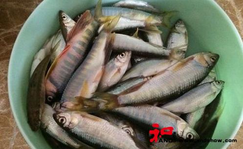 野钓马口鱼和白鱼的钓组搭配及垂钓技巧