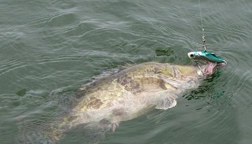 秋季路亚鳜鱼的钓具选择及钓法