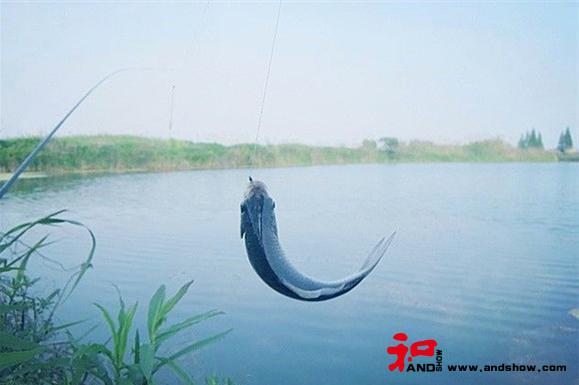 在钓鱼的过程中领悟人生